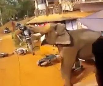 【動画】野生の像が興奮しバイクを持ち上げ大暴れする衝撃映像
