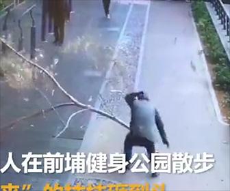 【動画】巨大な枝が落下し歩道を歩くおじいさんの頭に直撃してしまう衝撃映像
