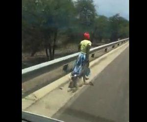 【動画】女性が猿を引きずりながら車道を歩く衝撃映像