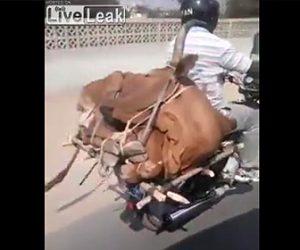 【動画】生きた牛を縄で縛りバイクの後ろに乗せて運ぶ男性