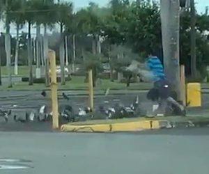 【動画】餌で集めた鳩達を投網で捕まえる衝撃映像