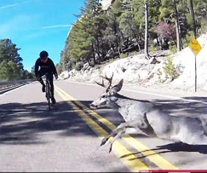 【動画】山道を猛スピードで下るロードバイクに鹿が突っ込んで来る衝撃映像