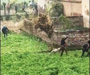 【動画】野生のヒョウが大暴れし次々と村人に襲いかかる衝撃映像