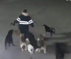 【動画】野良犬11匹から34歳女性が必死に走って逃げるが…