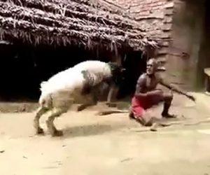 【動画】男性VS羊 猛スピードで突っ込んで来る羊を受け止める男性