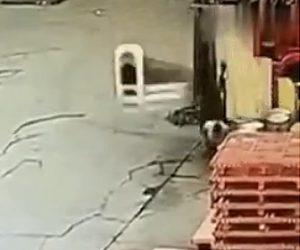 【動画】フォークリストが倒れ運転手の男性が押し潰されてしまう