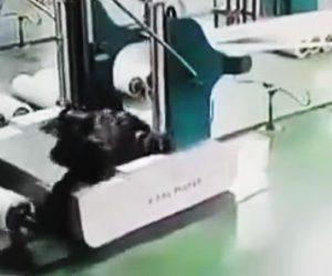 【動画】工場で回転する機械に作業員が巻き込まれてしまう衝撃映像
