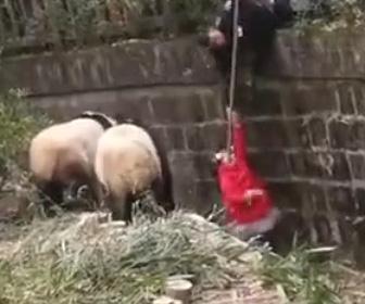 【動画】パンダの檻に落下してしまった少女にパンダが近づくが…