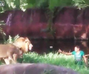 【動画】酔っ払い男がライオンの檻に入ってしまい、ライオンが近づいて来るが…