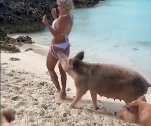 【動画】水着の女性がビーチでブタにお尻を噛まれる衝撃映像