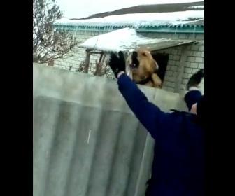 【動画】壁の向こうにいる犬をからかっている男性が後悔する