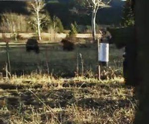 【動画】怒った母熊 VS 熊撃退スプレーも持った男性