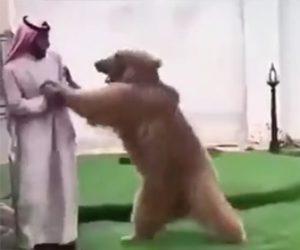 【動画】熊と遊ぶドバイ人男性が凄い