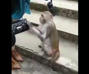 【動画】観光客の荷物をあさりまくり物を盗む猿
