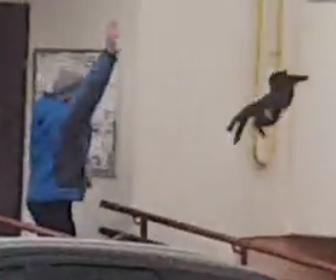 【動画】近づいて来たヘラジカに猫を投げつけ追い払う