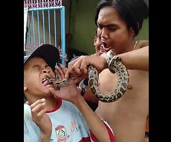 【動画】ヘビで遊んでいる少年が顔をヘビに噛まれてしまう衝撃映像