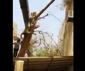 【動画】作業員が大木を切り倒するが、クレーンも倒れしてまい作業員に直撃してしまう衝撃映像