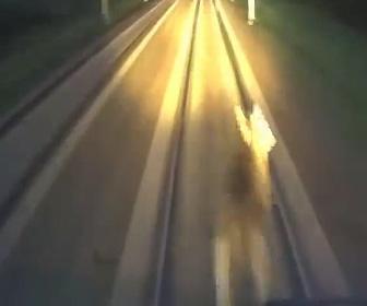 【閲覧注意動画】電車が森から出てきた鹿を轢いてしまう衝撃映像