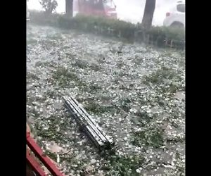 【動画】巨大な雹が降り4,400羽のアヒルが死亡してしまう衝撃映像