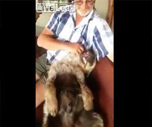 【動画】ペットのハイエナを可愛がるおじさんが凄い