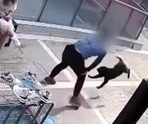 【動画】ペットショップの前で男が飼い犬を地面に叩きつける衝撃映像