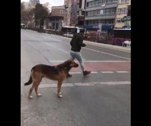 【動画】人間は信号を守らず赤信号を渡ってしまうが犬は信号を守る衝撃映像