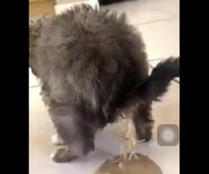 【閲覧注意動画】猫のお尻から大量の寄生虫が出てくる衝撃映像
