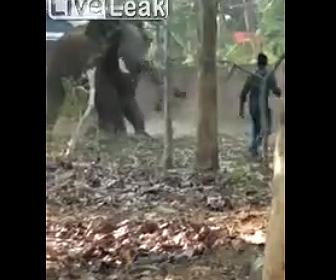 【動画】像が大暴れし男性が鼻で投げ飛ばされる衝撃映像