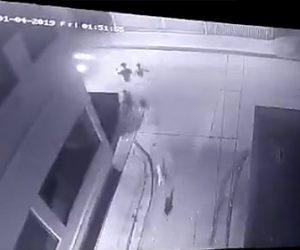 【動画】犬に追われ必死に逃げるが丁字路で猛スピードの車にはね飛ばされてしまう