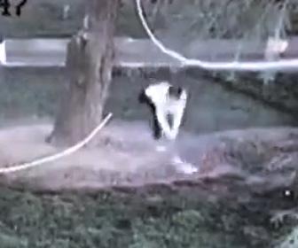【動画】若者3人が鳩を叩き殺し警察に逮捕される衝撃映像