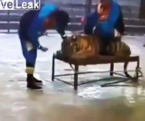 【動画】サーカスの舞台裏がヤバすぎる衝撃映像