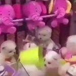 【動画】生きた子犬達を捕まえるクレーンゲームがヤバすぎる!
