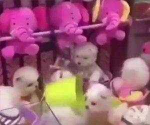 【動画】生きた子犬達を捕まえるクレーンゲームが凄い!