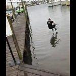 【動画】男性が桟橋から走って海に飛び込むが…衝撃の結末