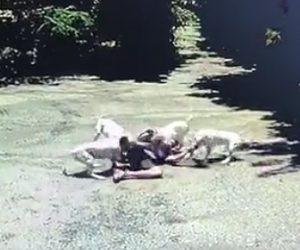 【閲覧注意動画】公園をランニングする男性に4匹の犬が襲いかかる衝撃映像