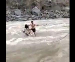 【動画】激流にとり残された犬を助け出す衝撃映像