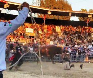 【動画】ロデオで暴れ牛から振り落とされたカーボーイが頭を打ち意識を失う衝撃映像