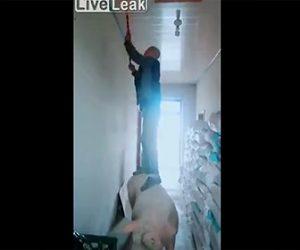 【動画】豚を使って天井の掃除をする男性が凄い!