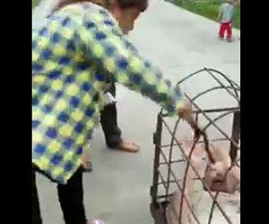 【動画】浮気した夫が鉄のカゴに入れら妻に唾を吐かれ棒で突かれまくる衝撃映像