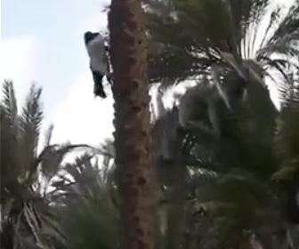 【動画】木から降りるヤギ。降りる角度がヤバすぎる