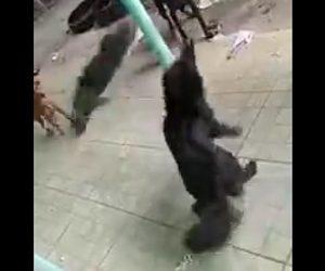 【動画】犬が口にくわえ振り回すネズミが飛んで来る衝撃映像