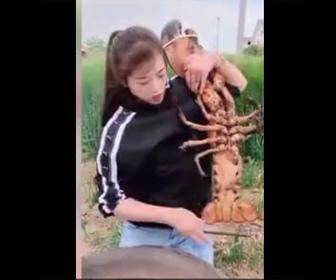 【動画】美女が超巨大ロブスターを食べる衝撃映像