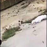 【動画】小さな子供が野犬3匹に襲われてしまう衝撃映像