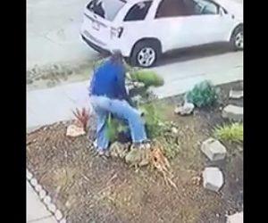 【動画】男が庭の木を引っこ抜き持ち去ってしまう衝撃映像