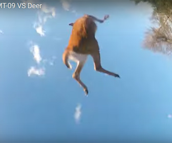 【動画】回避不能。猛スピードで走るバイクに鹿が突っ込んで来る衝撃映像