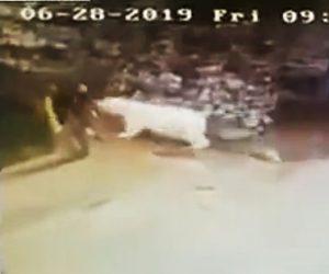 【動画】シロクマの檻の中を掃除する飼育員に巨大なシロクマが迫ってくる衝撃映像