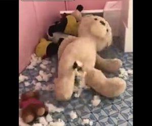 【動画】巨大なクマのぬいぐるみに犬が入り込む面白映像