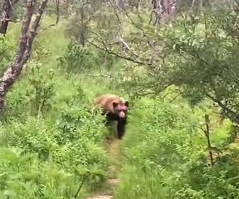 【動画】新婚夫婦がハイキング中、前から巨大なクマが迫ってくる衝撃映像