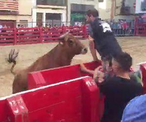 【動画】闘牛で壁に隠れ暴れ牛を挑発する男性に悲劇が…