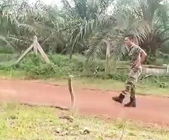 【動画】巨大キングコブラVS兵士 巨大なキングコブラに素手で立ち向かう兵士